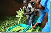 kibwezi_crops_1109