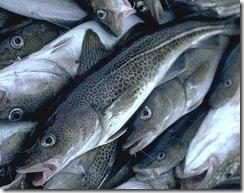 cod_fish