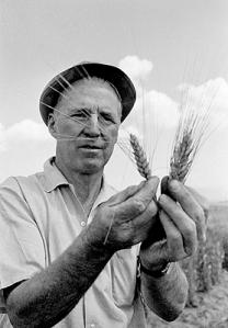 Borlaug, helgon eller syndare?